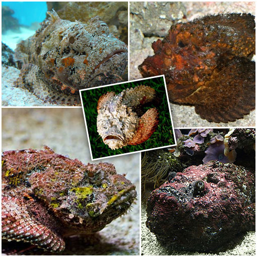 The Deadly StoneFish