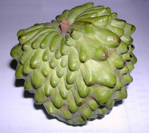 It is a cross between a cherimoya and a sugar-apple